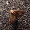 写真: yamanao999_insect2017_258
