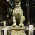 写真: 彌彦神社の狛犬