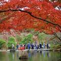 写真: 1.成田山紅葉まつり -A