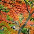 写真: 6.成田山紅葉まつりF-6
