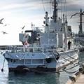 2.海上保安庁巡視船つくばと鴎の群れ-B