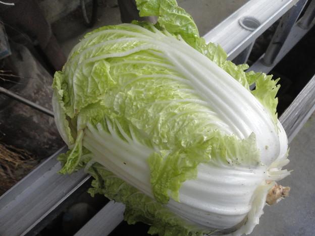 2017/11/25白菜