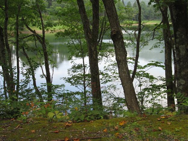 蔵王温泉・鴫の谷地沼3