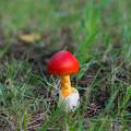 写真: 小さい秋、見つけた