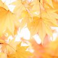 写真: 秋色・優色