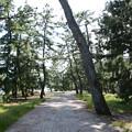 写真: 松並木道