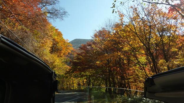 Photos: 黄金色の道