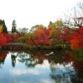 永観堂の池