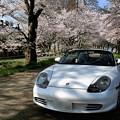 愛車と桜かな