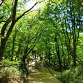 葛城山上遊歩道
