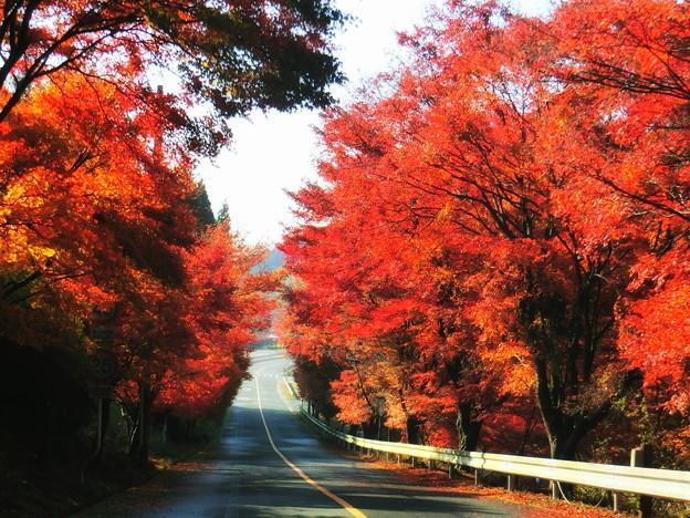 嵐山高雄パークウェイの紅葉2