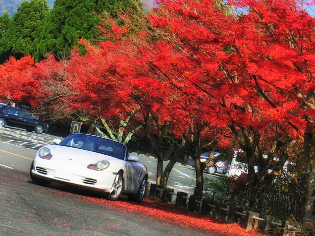 嵐山高雄パークウェイの紅葉3