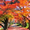 写真: 宇治川の紅葉