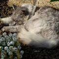 写真: 猫の幸せ