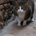 イタリア コッレ・ディ・ヴァルザの猫