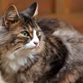 Photos: 山寺の猫