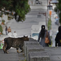 Photos: 参道の猫