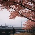 写真: 早春