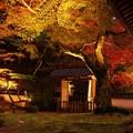 写真: 藤江氏魚楽園庭園ライトアップ