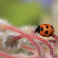 写真: かわいらしい肉食昆虫