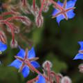 写真: 星型の青い宝石