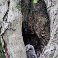 写真: 巣穴の雛ちゃん
