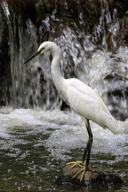 白い捕食者 1