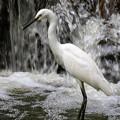 写真: 白い捕食者 1