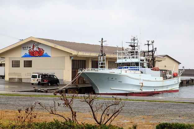 カニ漁最盛期の浜坂漁港