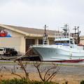 Photos: カニ漁最盛期の浜坂漁港