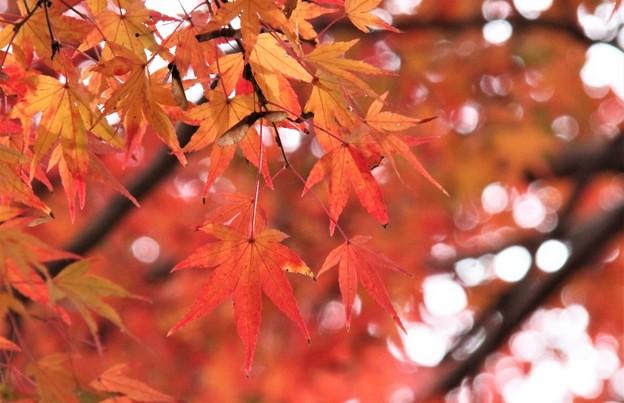 紅葉1 (2)