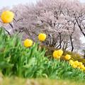 写真: 沼田城址公園の春