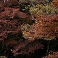 Photos: 2010京都植物園秋13
