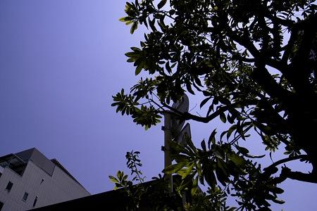 2011-05-19の空