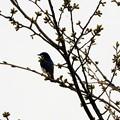 背後から素敵な小鳥さん~