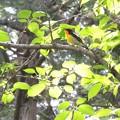 福島県の鳥です