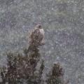 写真: 雪が降ってても~