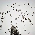 写真: 小鳥さんの集団移動~