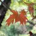 写真: 秋葉