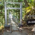 Photos: 井川夢の吊橋