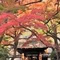 写真: 円覚寺居士林紅葉