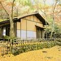茶室と銀杏の落葉