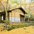 写真: 茶室と銀杏の落葉