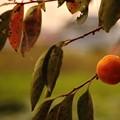 写真: 秋の夕暮れ
