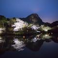 御船山楽園 桜ライトアップ