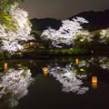 御船山楽園 桜ライトアップ 2