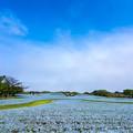海の中道海浜公園 ネモフィラ