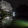 ジラカンス桜 4