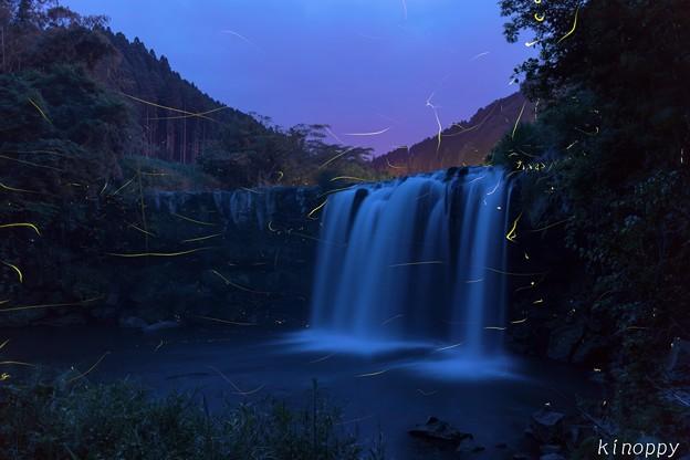 仙洞の滝 ホタル