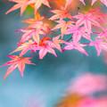 秋景色 2